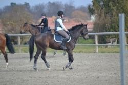reprise_chevaux
