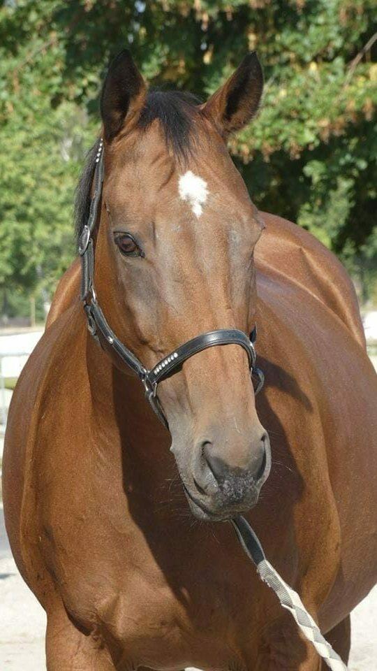 Photo du cheval Miss de la cavalerie du Club Hippique Eckwersheim