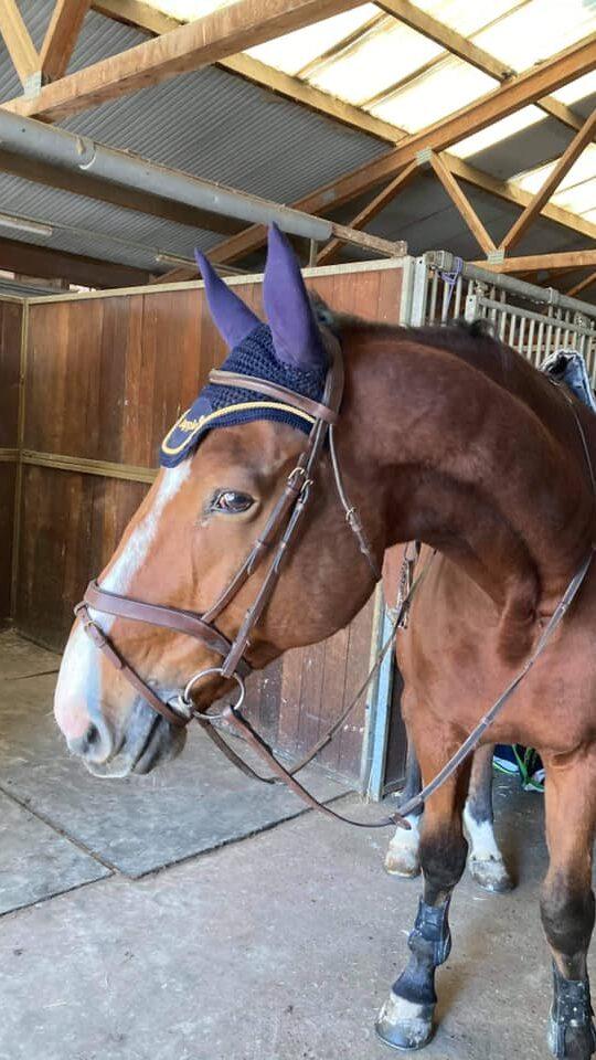 Photo du cheval Arès de la cavalerie du Club Hippique Eckwersheim