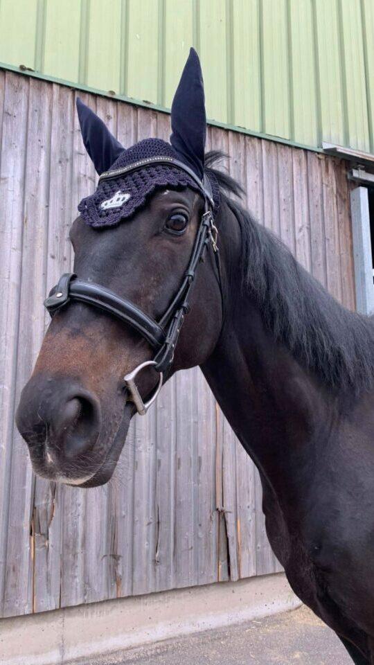 Photo du cheval Esprit de la cavalerie du Club Hippique Eckwersheim