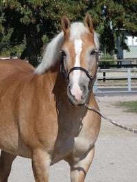 Photo du cheval Bluna de la cavalerie du Club Hippique Eckwersheim