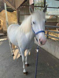 Photo du poney Finley de la cavalerie du Club Hippique Eckwersheim