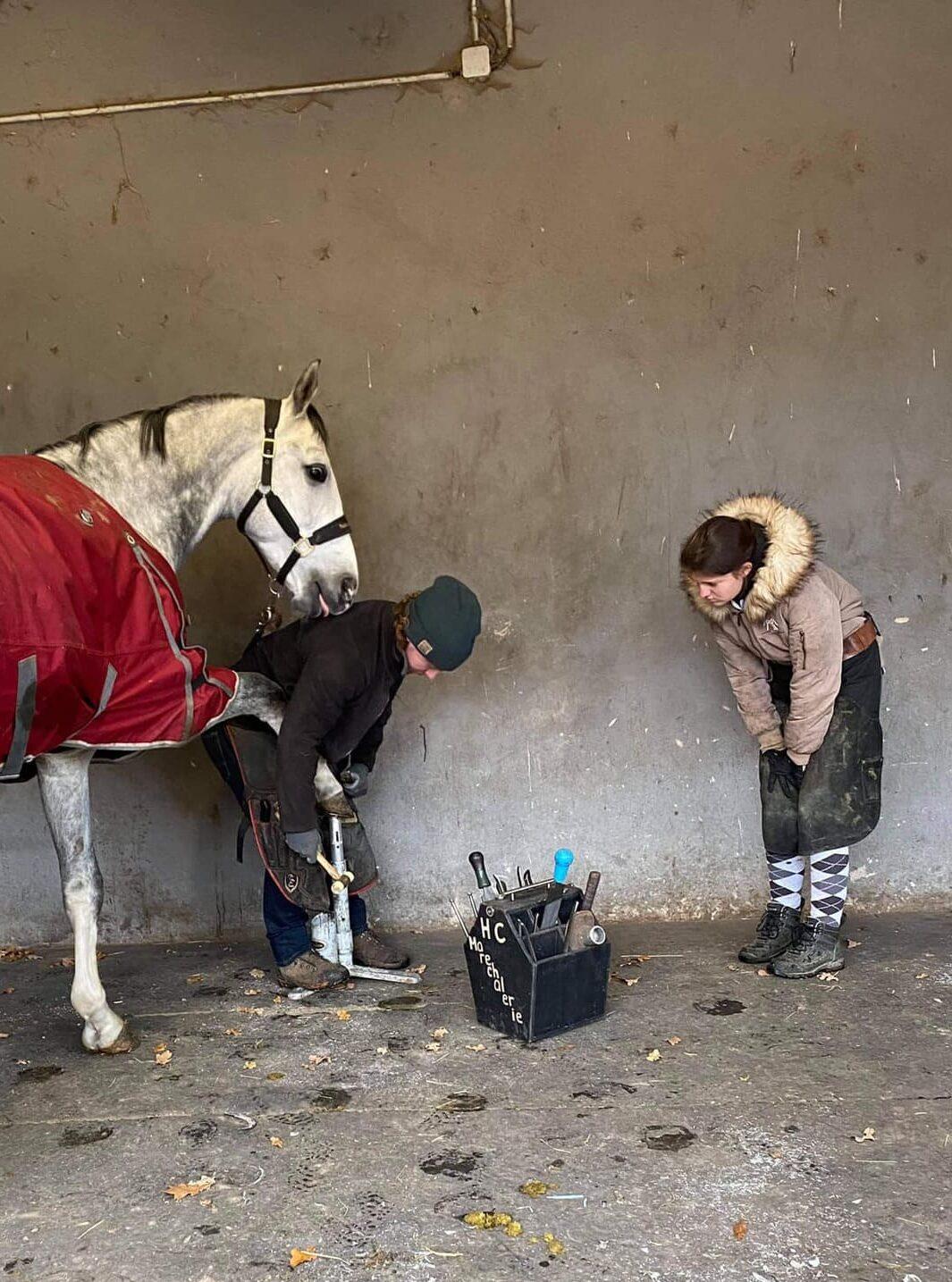 Un marechal ferrant qui s'occupe des fers d'un cheval du Centre équestre Eckwersheim