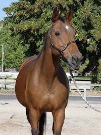 Photo du cheval Neottia de la cavalerie du Club Hippique Eckwersheim