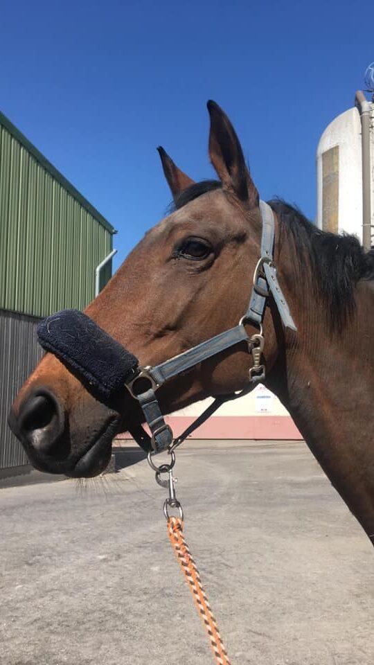 Photo du cheval Solane de la cavalerie du Club Hippique Eckwersheim
