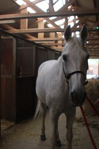 Photo du cheval Wally de la cavalerie du Club Hippique Eckwersheim
