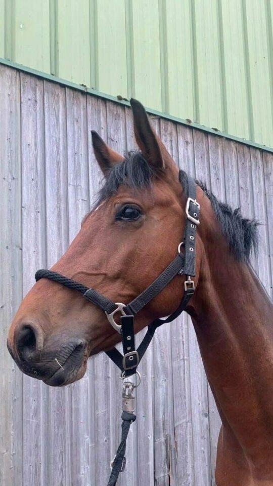 Photo du cheval Fable de la cavalerie du Club Hippique Eckwersheim