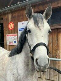 Photo du poney Guimauve de la cavalerie du Club Hippique Eckwersheim