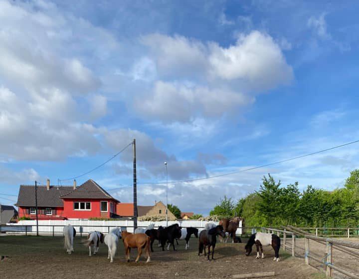 Photo d'illustration de poneys et chevaux dans un champs Club Hippique Eckwersheim Strasbourg